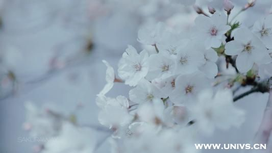 共度余生只有你_只有你活得漂亮了,世界才会把你温柔相待