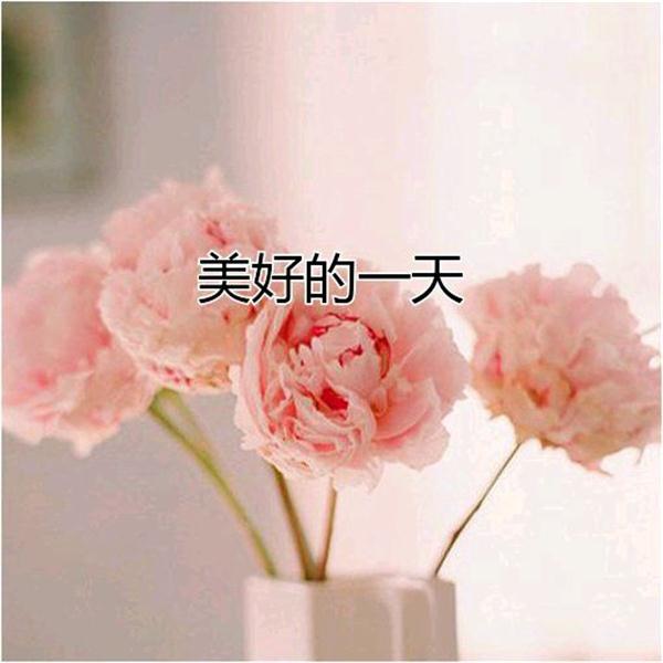 早上好图片带字和鲜花