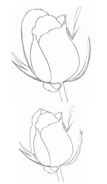 玫瑰花的素描画法图解 玫瑰花素描步骤图图片