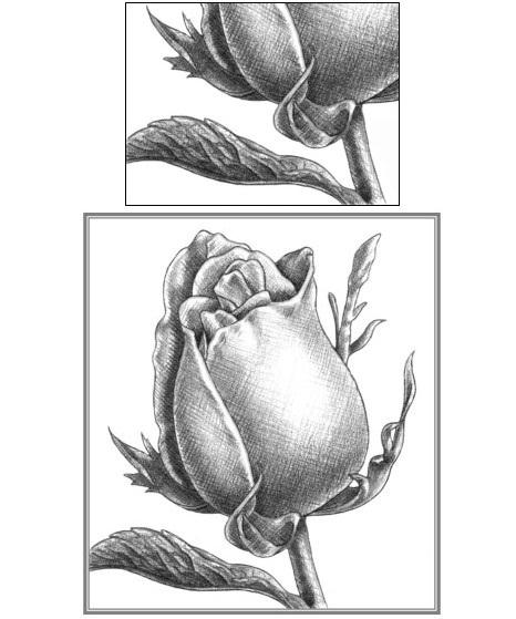 玫瑰花的素描画法图解 玫瑰花素描步骤图