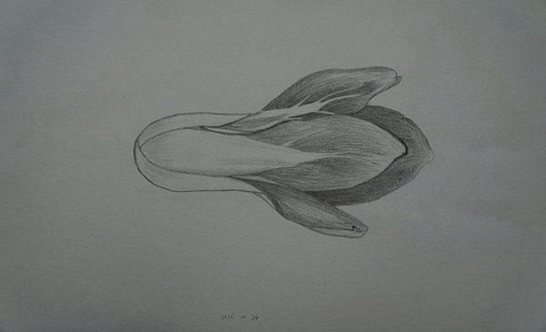 素描图片简单一点的 素描画简单好看易画