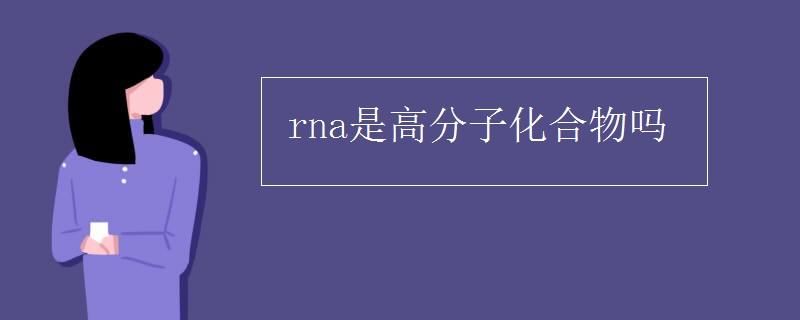 rna是高分子化合物吗