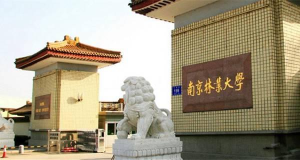 南京林业大学介绍   南京林业大学坐落在风景秀丽的紫金山麓、碧波荡漾的玄武湖畔,是一所中央与地方共建的省属重点高校。南京林业大学作为一所以林科为特色,以资源、生态和环境类学科为优势的多科性大学,不断深化教育教学改革,继承发扬了艰苦创业的光荣传统,形成了团结、朴实、勤奋、进取的校风和诚朴雄伟,树木树人的校训。毕业生遍布全国各地,深受用人单位欢迎。