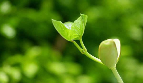 种子生产与经营专业