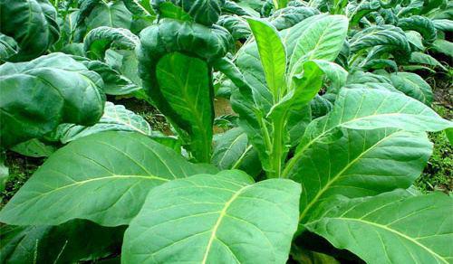 就业方向:植物生产类专业毕业生主要到农业